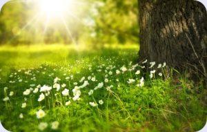 Waldwiese mit Blumen, Baumstamm und Sonnenlichtreflektion. Ist richtiges atmen hier leichter?