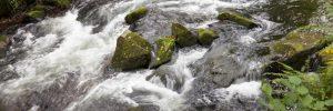Wildbach bahnt sich den Weg über bemooste Steine. Fluss des Lebens.