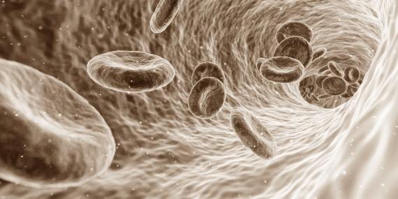 Kapillare - dargestellt mit Blutkörperchen in Sepiafarbe.
